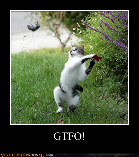 animals cat hilarious mouse - 5417259776