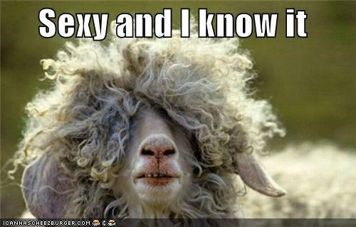 animals cant-see good looking im-too-sexy sexy sheep wool - 5417668096