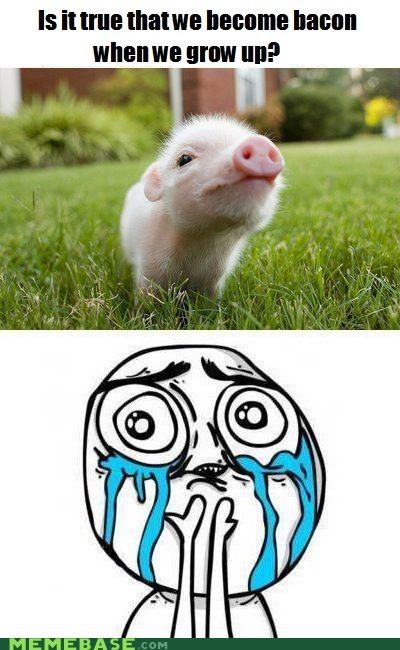 america animemes bacon cute pig Rage Comics squee - 5418110976