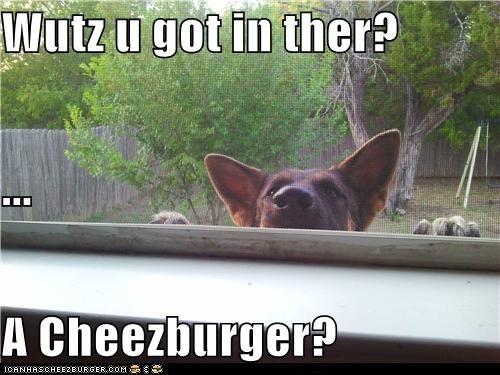 Cheezburger Image 5418756864