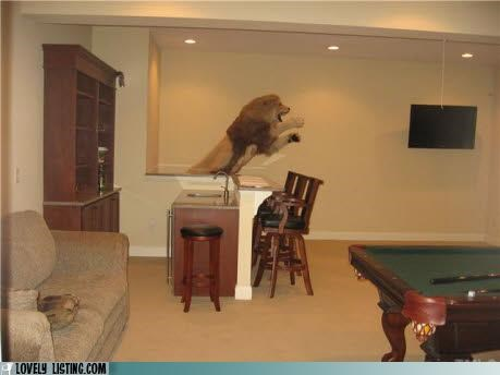 jump,leap,lion,stuffed,taxidermy