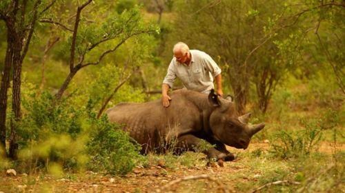 black rhino Extinct Species IUCN wwf