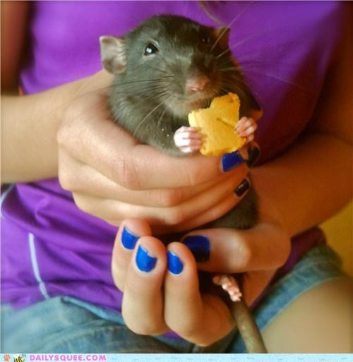 cookies do want Hall of Fame holiday nomming noms rat reader squees theme - 5419031296