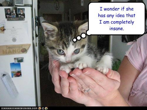any best of the week caption captioned cat completely evil Hall of Fame has idea insane kitten maniacal owner wonder