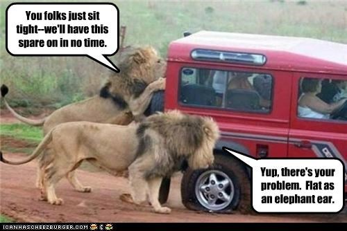 assistance,caption,captioned,humvee,lion,lions,mechanics,roadside,serengeti