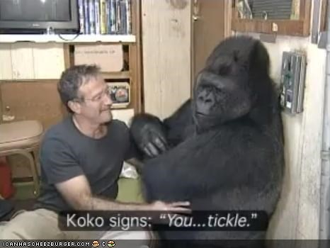 around the interwebs,gorillas,koko,robin williams,Video