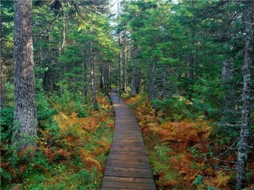 fern foot path Forest getaways green unknown location user submitted - 5419591424
