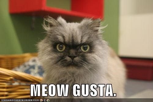 best of the week caption captioned cat gusta Hall of Fame me gusta meme meow Rageface TLL - 5419603968