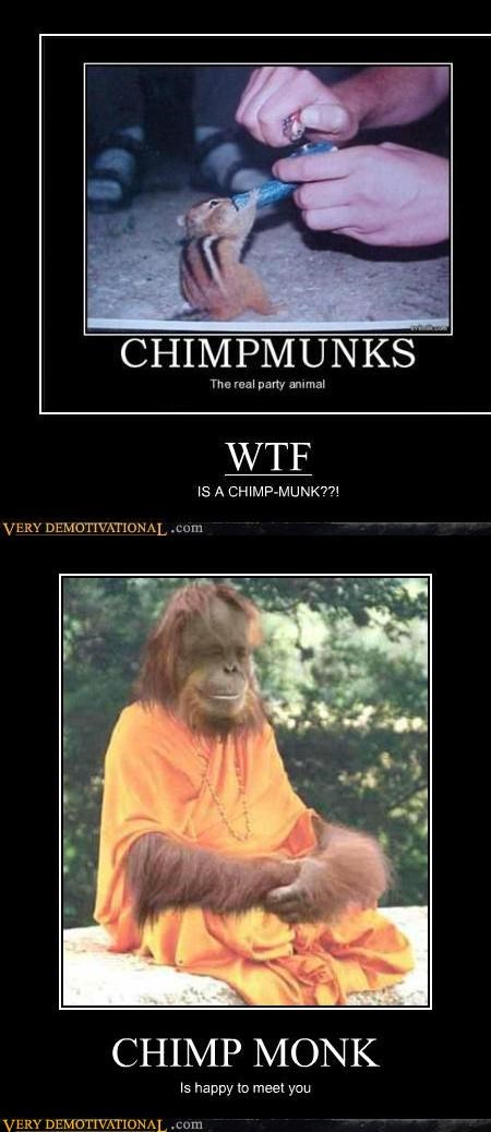 animals chimp hilarious know your apes monk orangutan - 5419900672