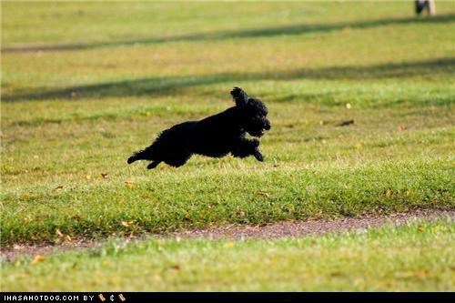 cyoot puppeh ob teh day,leaping,puppy,running,terrier,whatbreed