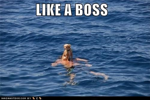 chihuahua,float,floating,flotation device,human,Like a Boss