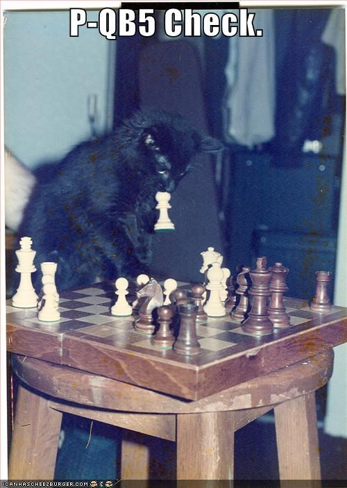 caption captioned cat check chess kitten location moving pawn - 5420141568