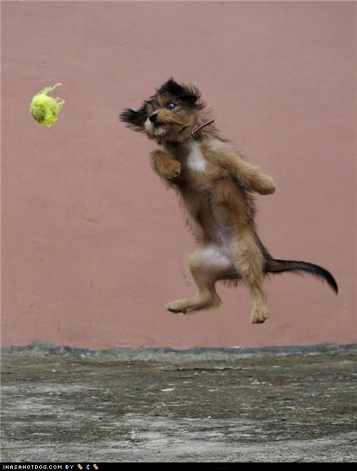 ball cyoot puppeh of teh day having fun jump jumping play playing whatbreed whoa - 5420162304