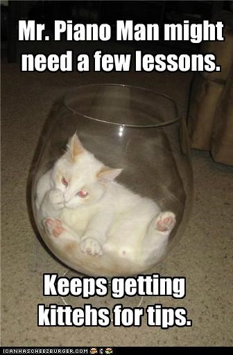 bowl caption captioned cat Cats few getting keeps lessons might need piano man tip tips