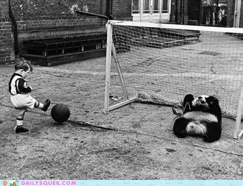 acting like animals ball bear goalie goalkeeping guarding panda panda bear soccer - 5420693504