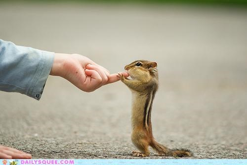 chipmunk finger inspecting job lolwut noms routine searching tasting - 5420722176