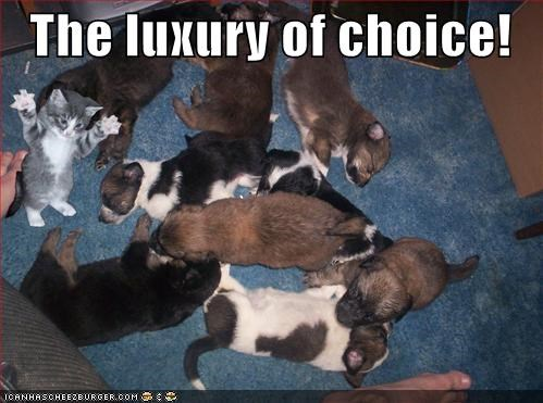 cat,choices,claws,first strike,kitten,plan of attack,pounce,puppies,puppy