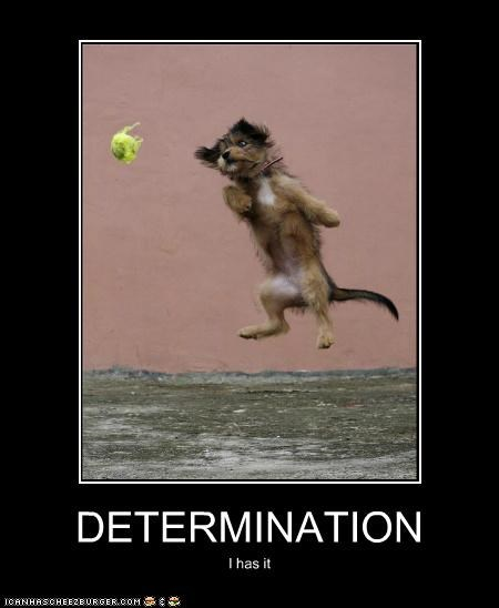 DETERMINATION I has it