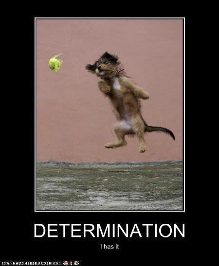 ball fetch tennis ball whatbreed - 5421182464