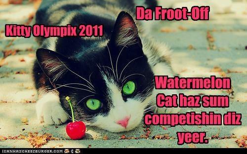 Kitty Olympix 2011 Watermelon Cat haz sum competishin diz yeer. Da Froot-Off