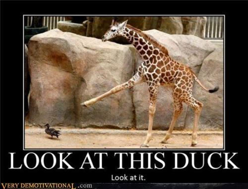 animals,duck,giraffes,Hall of Fame,hilarious,wtf