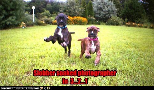 Cheezburger Image 5422240512