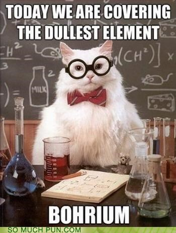 bohrium,boring,chemistry cat,dull,element,similar sounding