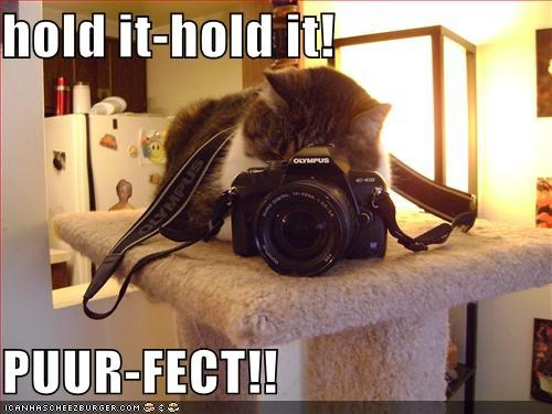 camera caption captioned cat hold hold it perfect photographing photography pose prefix pun purr - 5422733056