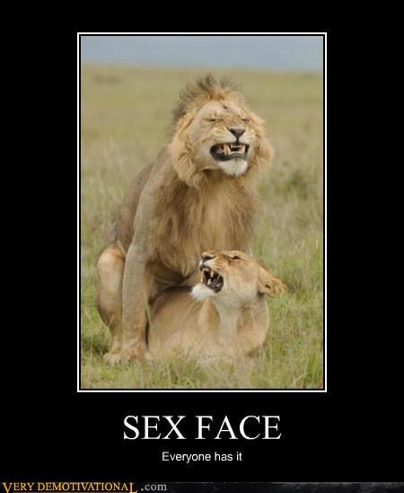 animals face hilarious lions sexy times - 5422755328