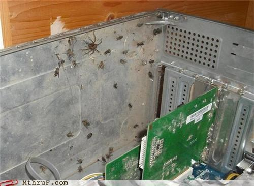 computer bugs infestations spiders