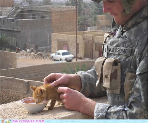 baby cat Cats dogs Hall of Fame heartwarming kitten service soldier soldiers thanks touching unbearably squee veterans veterans day - 5423426560