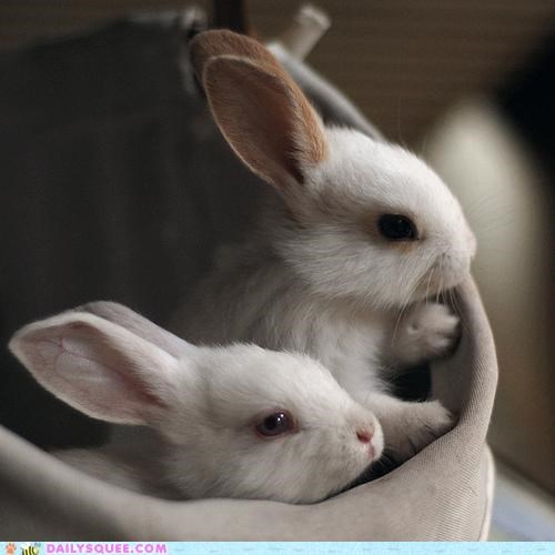 bunnies,bunny,companions,company,happy bunday,rabbit,rabbits,satchel,Travel,traveling