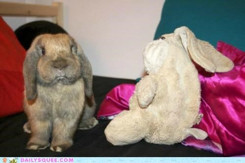 brunch bunny disgruntled expression grumpy happy bunday host rabbit stuffed animal - 5423686656