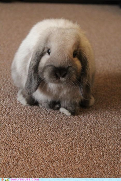 bunny,happy bunday,idiom,rabbit,rhyme,rug,smug