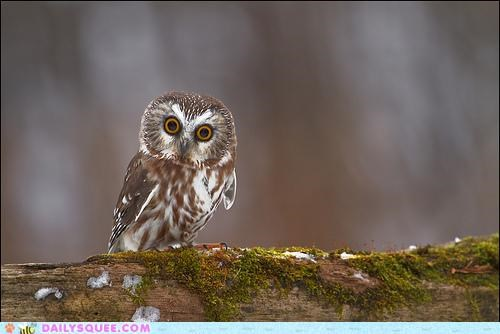 accident,acting like animals,observation,Owl,pain,surprised,watching,wide eyed,witness