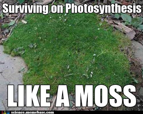 Botany,Memes,moss,photosynthesis