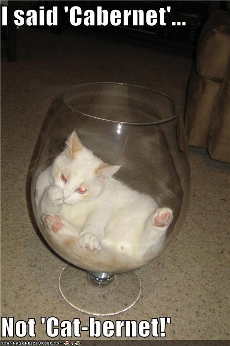 alcohol cabernet cat drinking I Can Has Cheezburger mistake oops wine