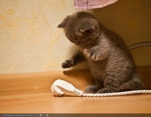 attack,cords,cyoot kitteh of teh day,extension cord,standing,vs