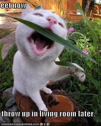 eating grass lolcats outdoors vomit white - 542559488