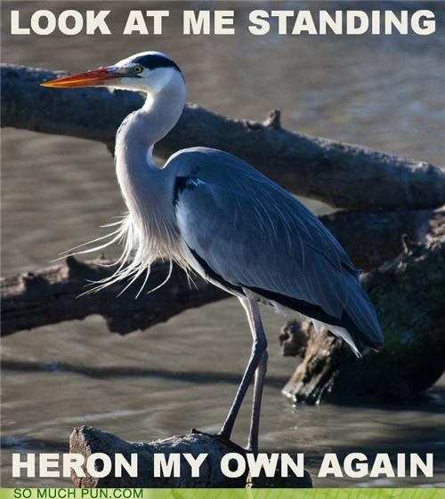 ace of base,again,here,heron,literalism,look,lyrics,me,my,on,own,similar sounding,song,standing