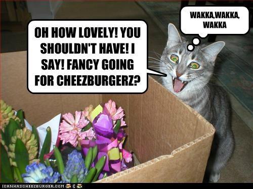 OH HOW LOVELY! YOU SHOULDN'T HAVE! I SAY! FANCY GOING FOR CHEEZBURGERZ? WAKKA,WAKKA, WAKKA