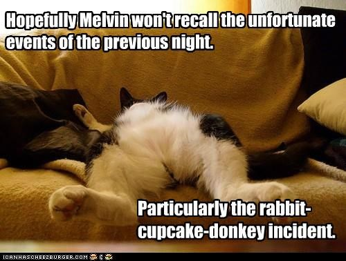 Hopefully Melvin won't recall the unfortunate events of the previous night. Particularly the rabbit-cupcake-donkey incident.