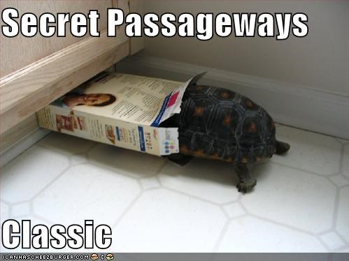 animals secret Secret Passage turtle - 5426955776