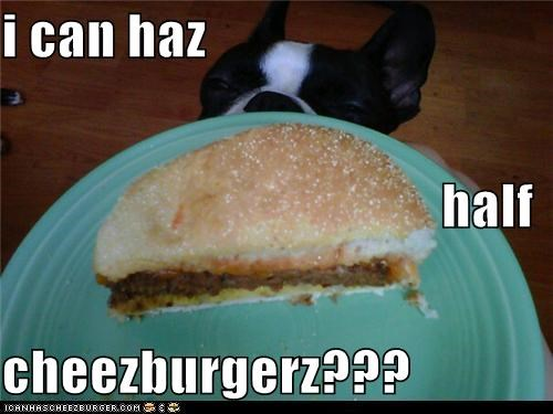 Cheezburger Image 5428755456
