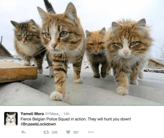 animals showing off squad goals that us human's can only dream of