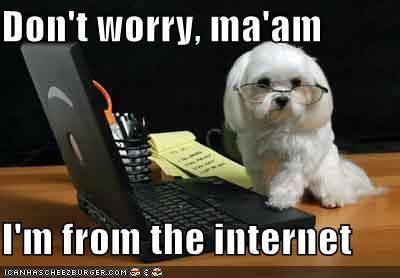 internet maltese - 542964480