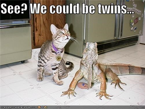 animals,cat,I Can Has Cheezburger,iguana,lizard,pets,twins