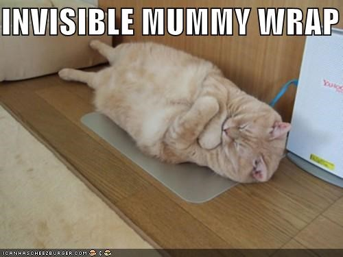caption,captioned,cat,hugging,invisible,mummy,sleeping,tabby,wrap