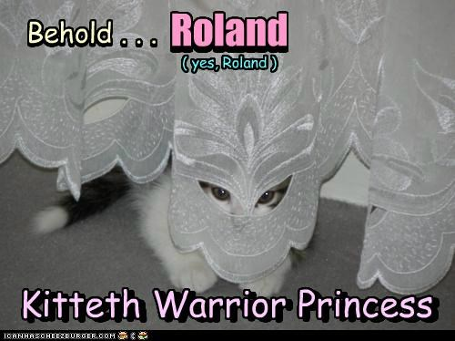 behold caption captioned cat curtain kitten lolwut princess warrior - 5432225536