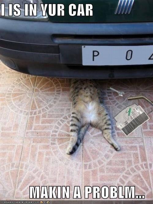 car,car trouble,cat,causing a problem,I Can Has Cheezburger,oops,problem